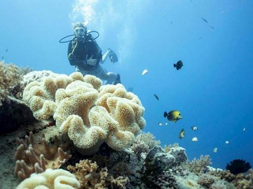 Diver from Manta dive resort crew